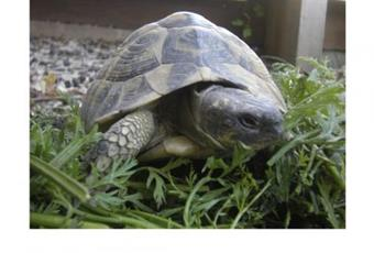 Alimentation tortue clinique veterinaire lingostiere nice
