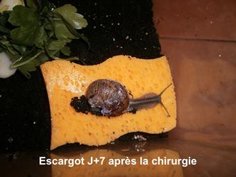Reparation coquille escargot