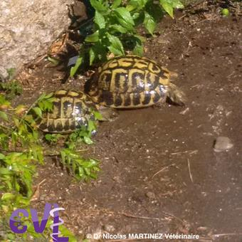 Hydratation tortue pluis